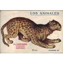 El leopardo. Su naturaleza, costumbres y modo de cazarlo