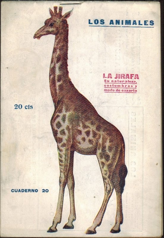 La jirafa. Su naturaleza, costumbres y modo de cazarlo