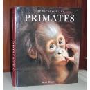 Dedicado a los primates