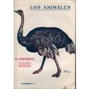 El avestruz. Su naturaleza, costumbres y modo de cazarlo