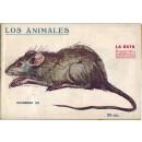 La rata. Su naturaleza, costumbres y modo de cazarlo