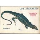 El lagarto. Su naturaleza, costumbres y modo de cazarlo